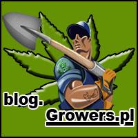 uprawa, hodowla, indoor, outdoor, na dworze, w domu, pomieszczeniu, marihuany, konopi, cannabis